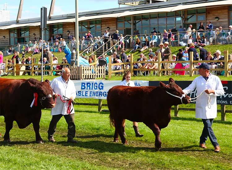 Agriculture, Livestock & Equine image