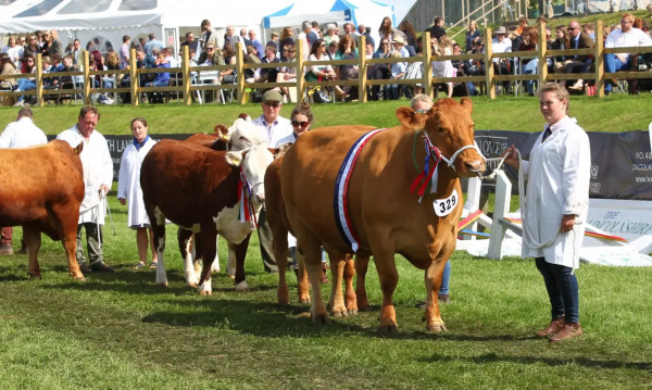 The Grand Parade of Livestock image